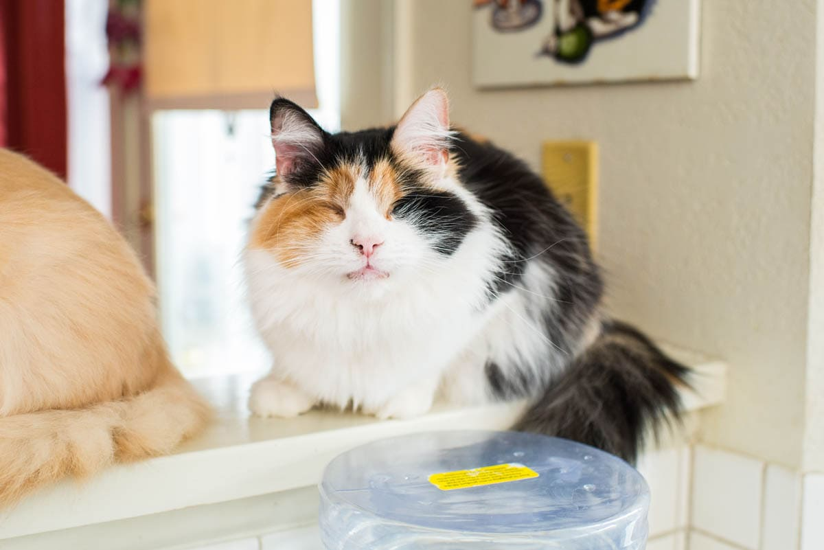 Blindness in cats