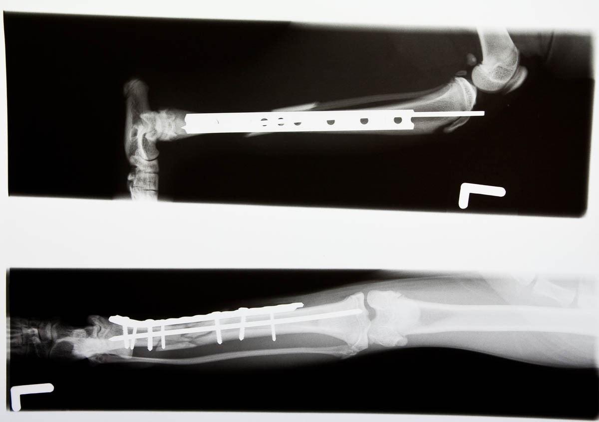 Broken bones in cats