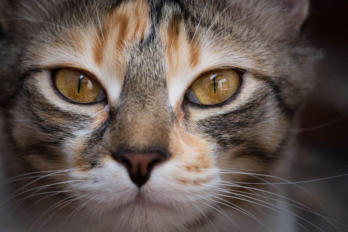 Broken jaw in cats