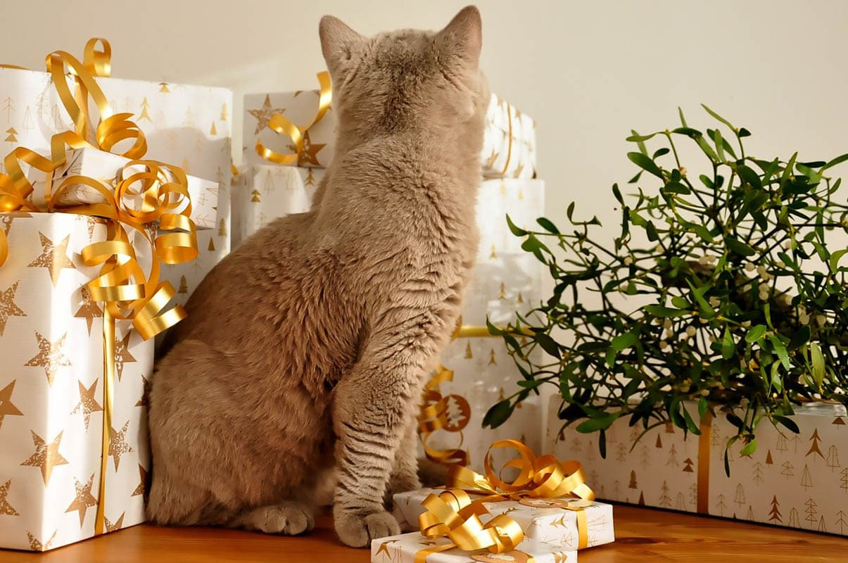 Buying a cat as a gift