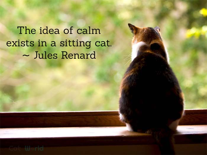 The idea of calm exists in a sitting cat