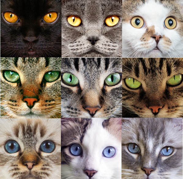 Cat eye colours