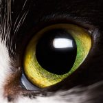 8 Common Eye Problems in Cats