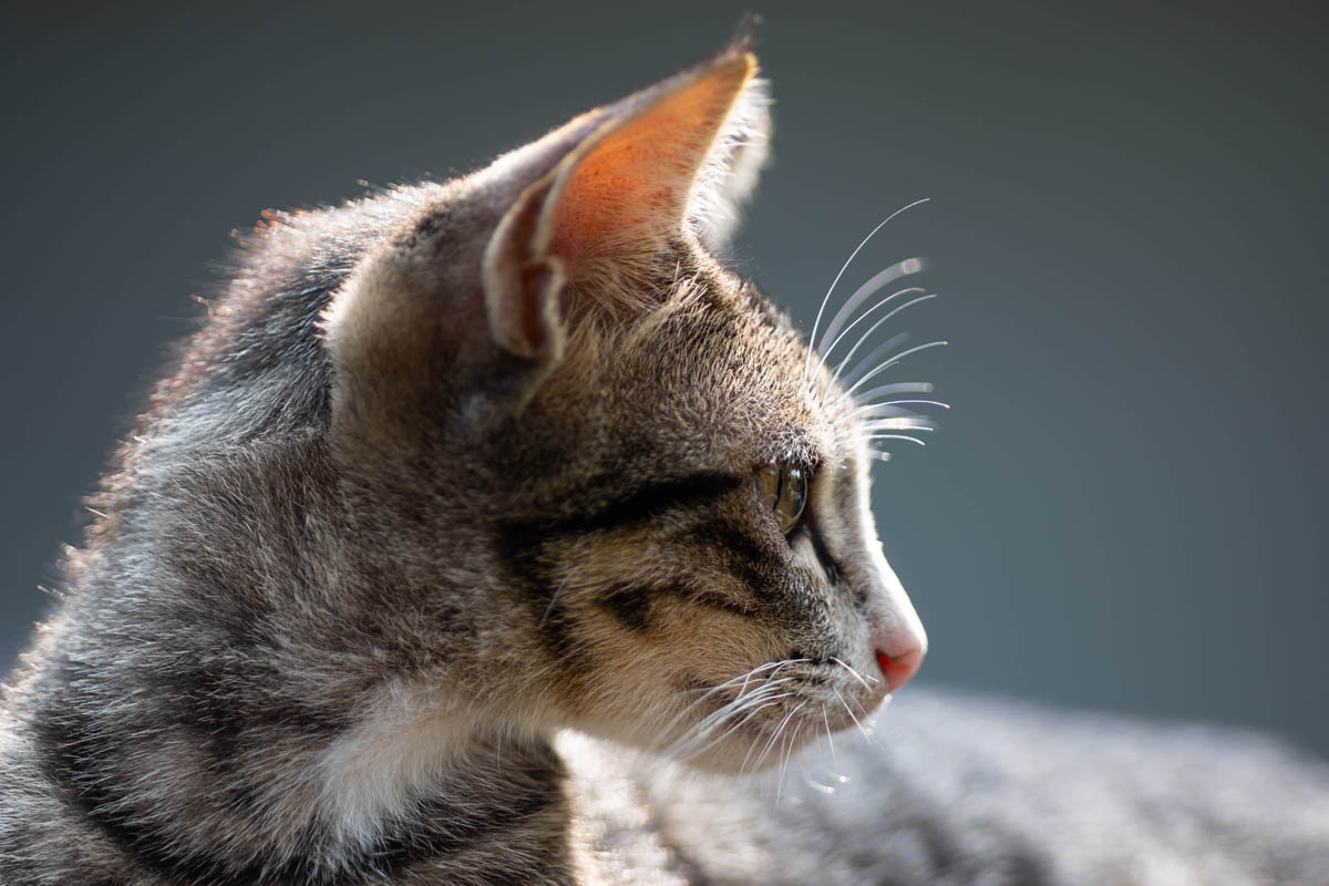Cat facts and trivia
