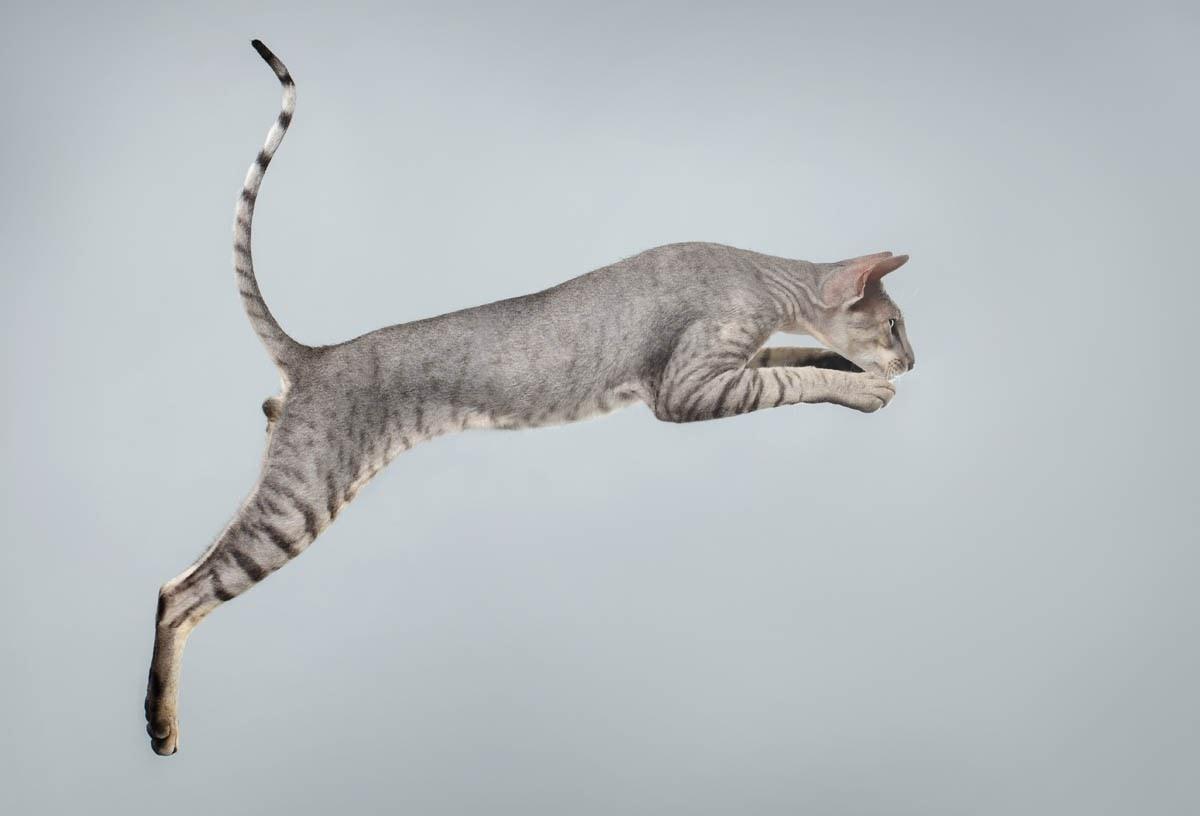 Cat flexibility