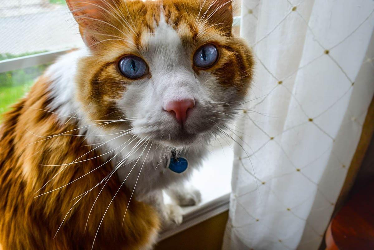 Cat identification