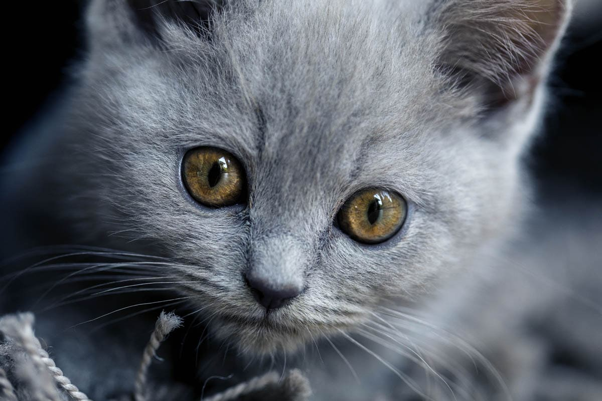 Essential cat products checklist