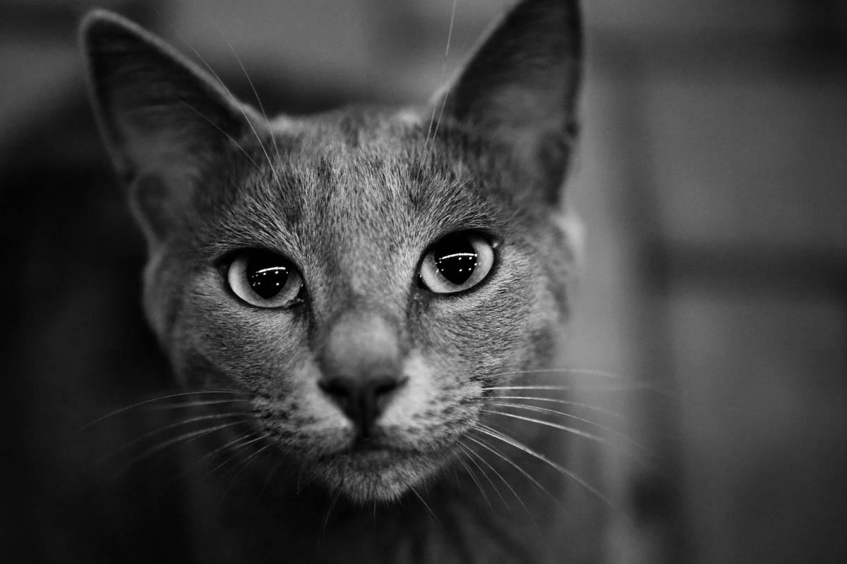 Cat vital signs