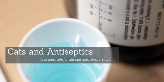Antiseptics safe for cats