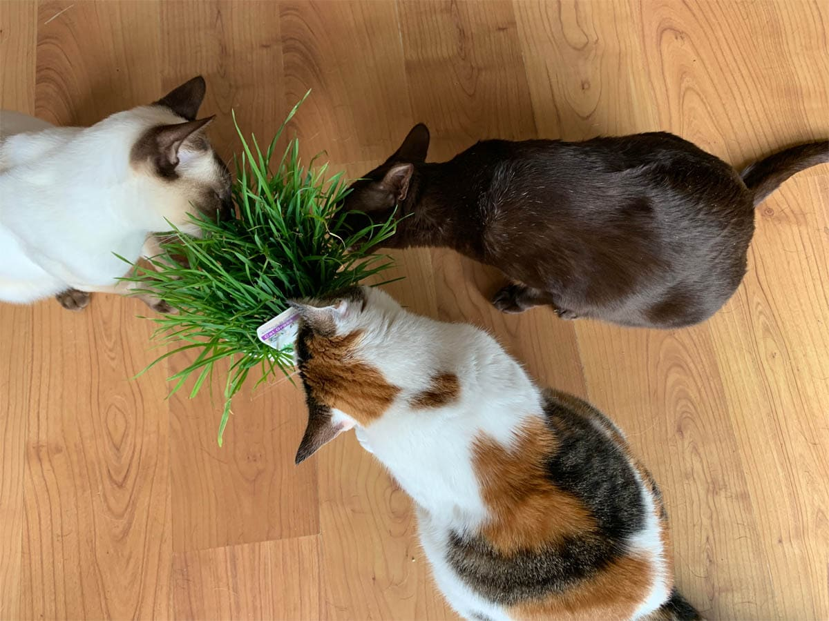 Add some greenery for your cats