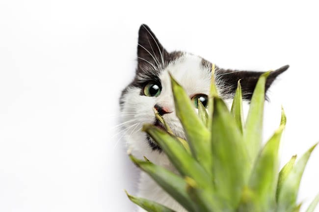 Common cat dangers in the home