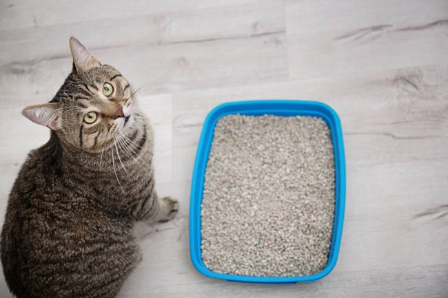 Common causes of litter tray refusal