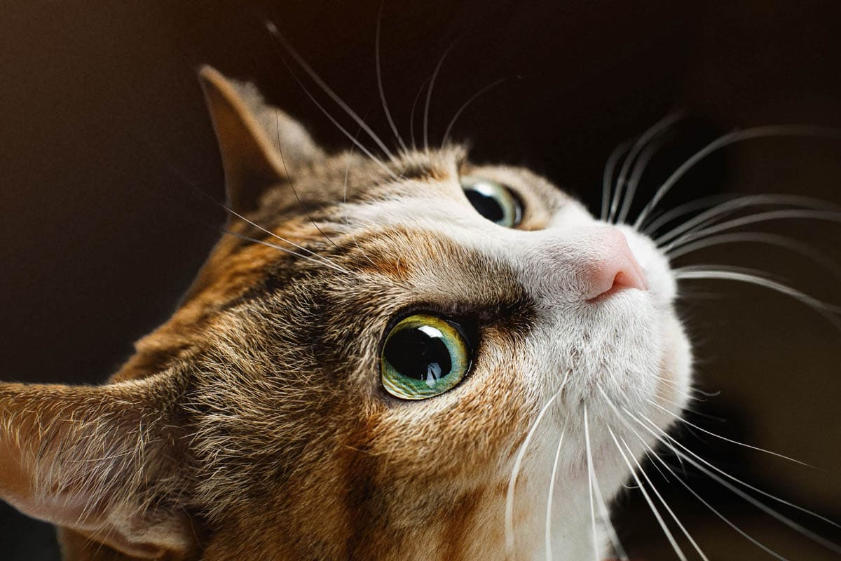 Common myths about cats