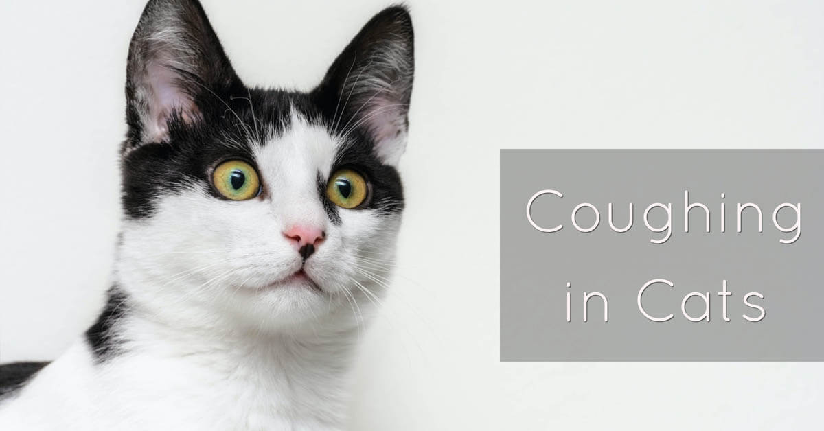 Coughing in cats