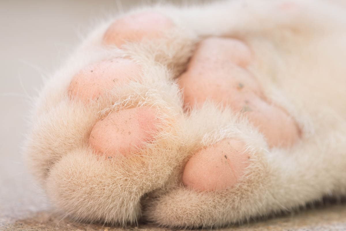 Declawing a cat