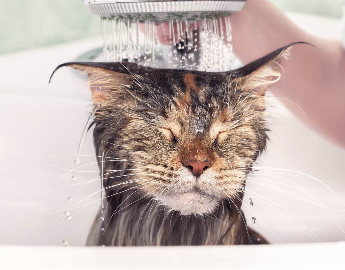 Do cats need a bath?