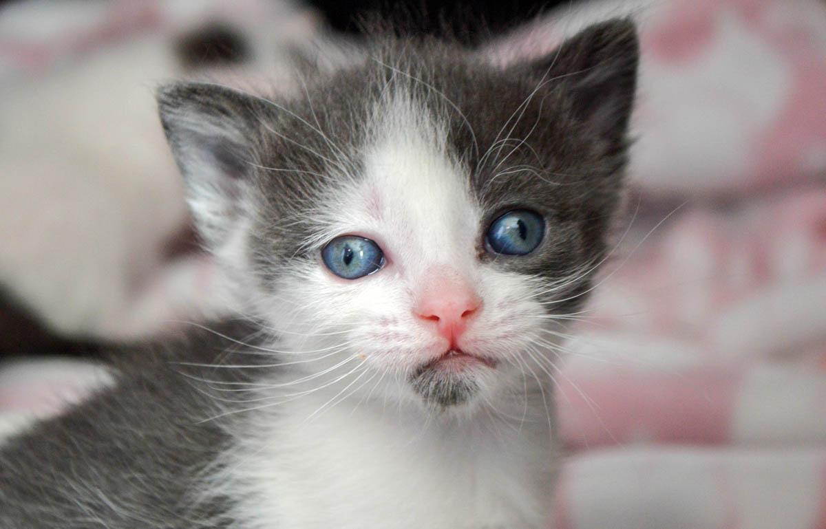 Four week old kitten