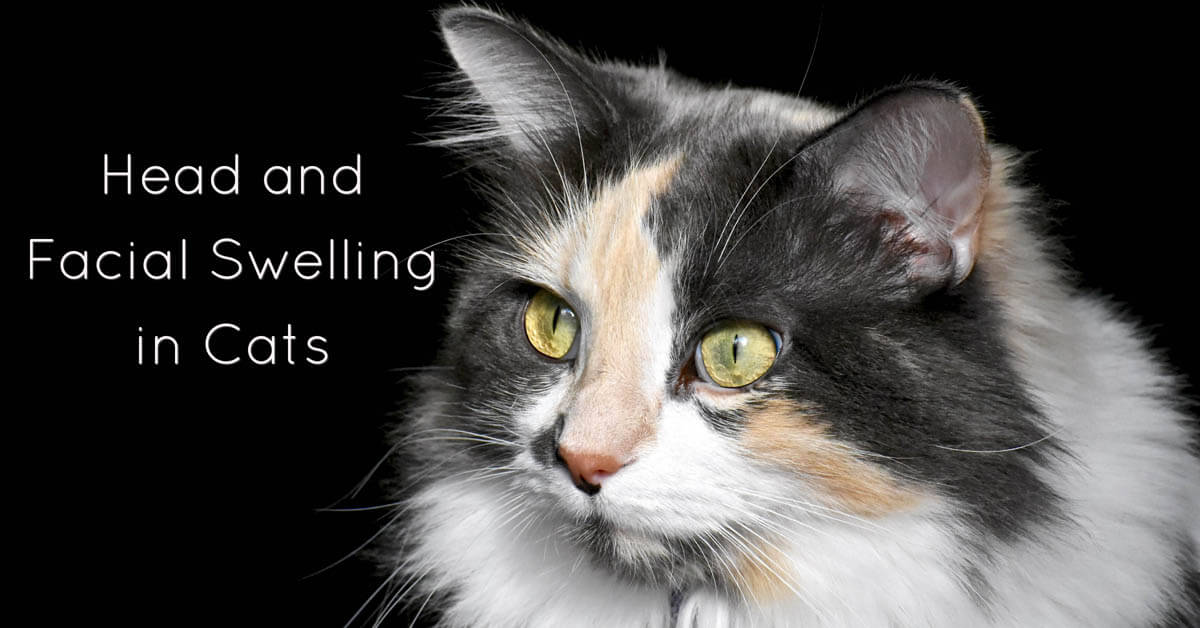 Head and facial swelling in cats