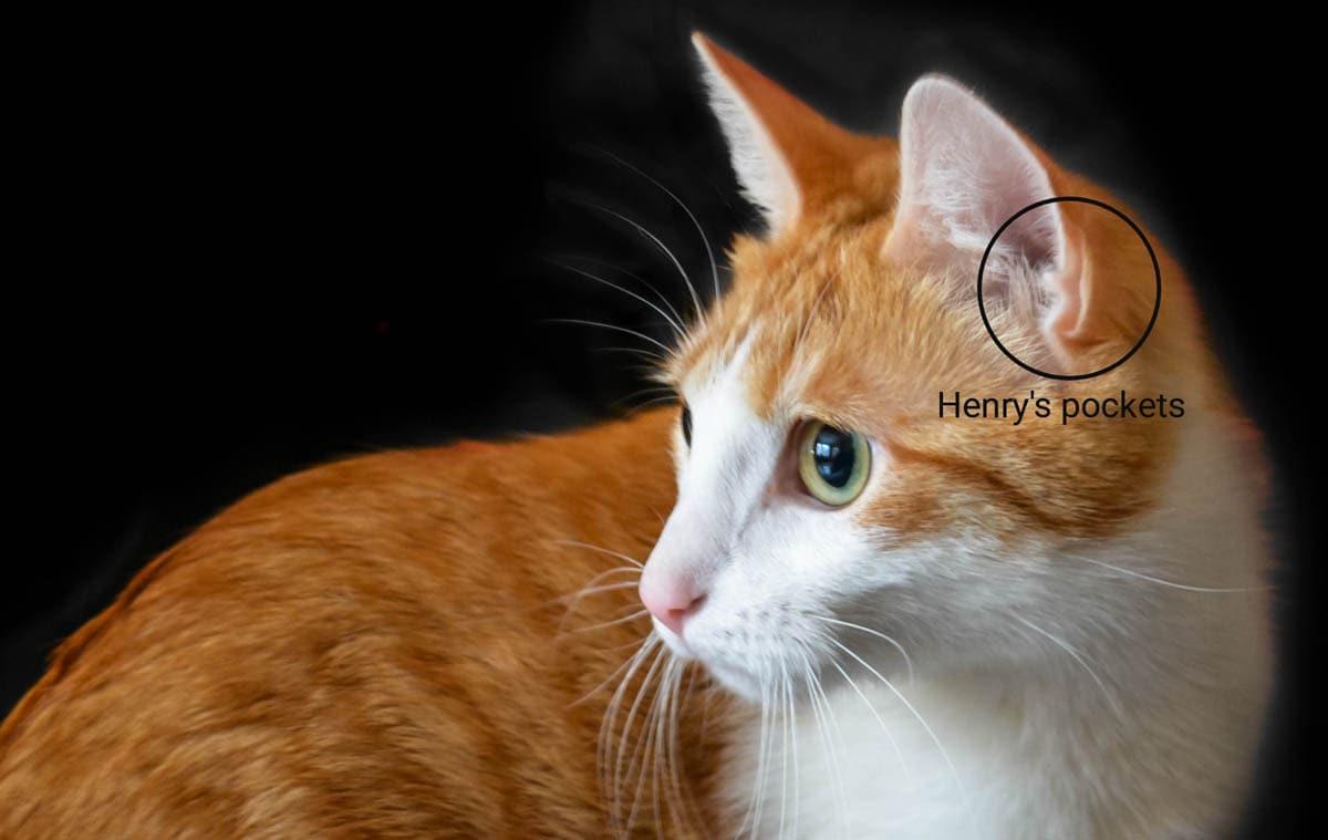 Henry's pockets