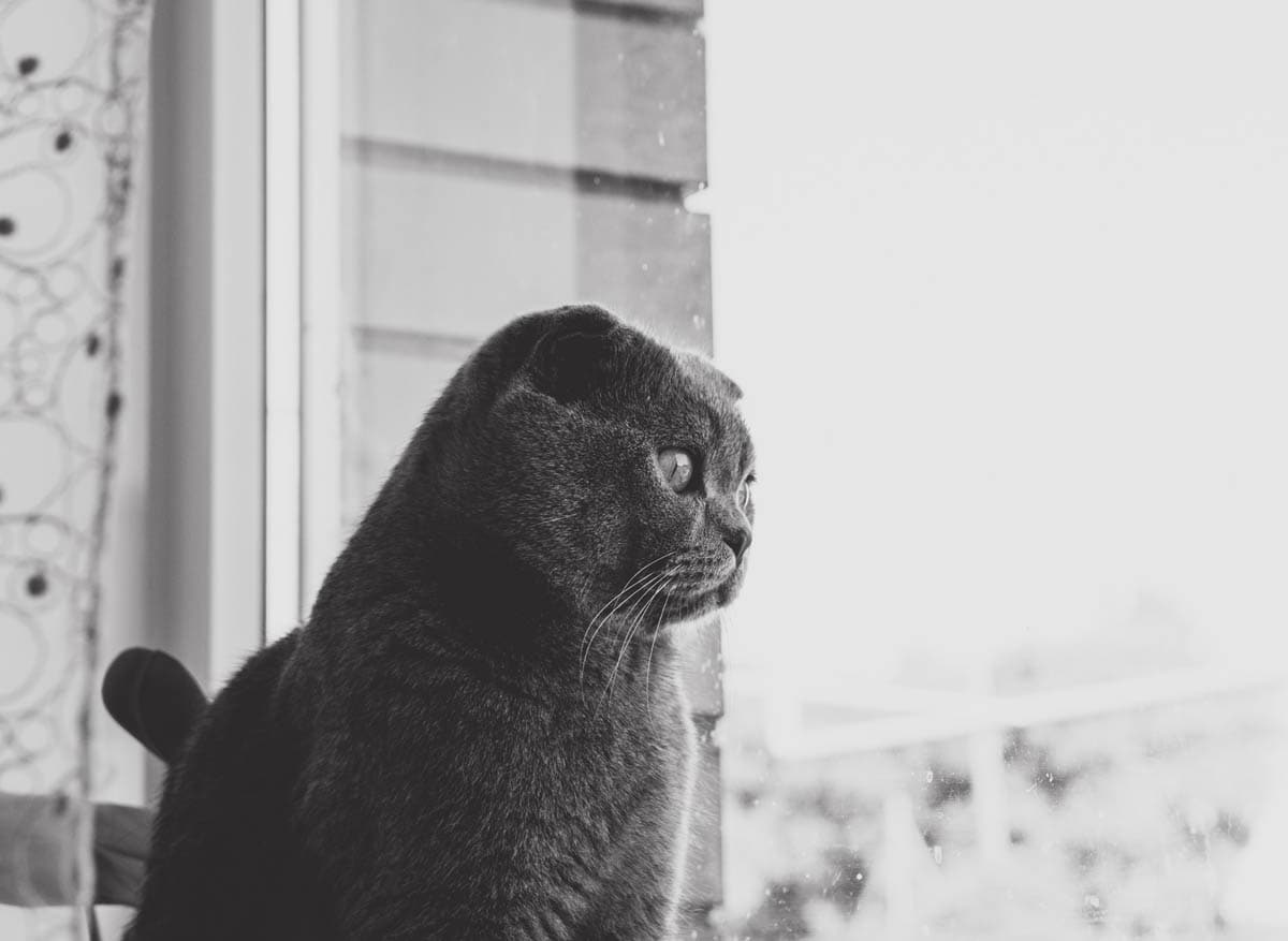 High rise syndrome in cats