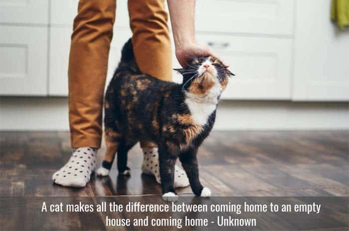 Coming home to a cat