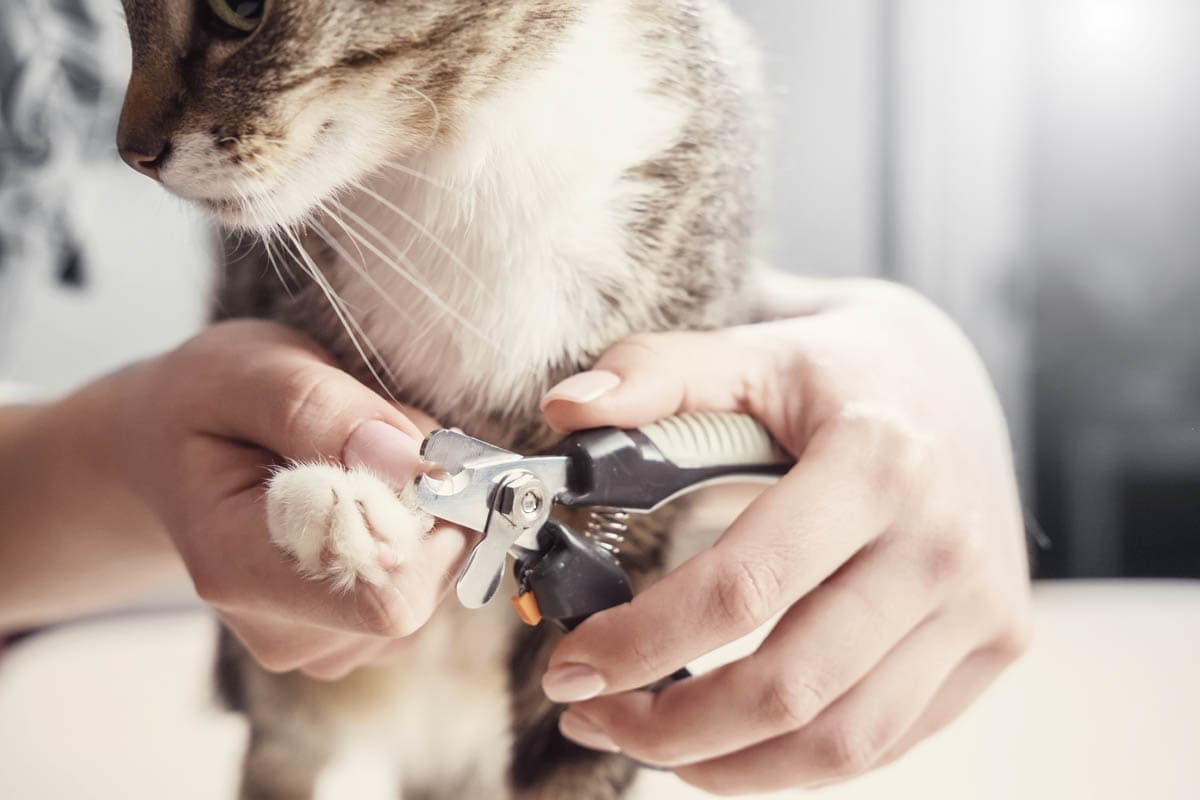 How to trim a cat's claws