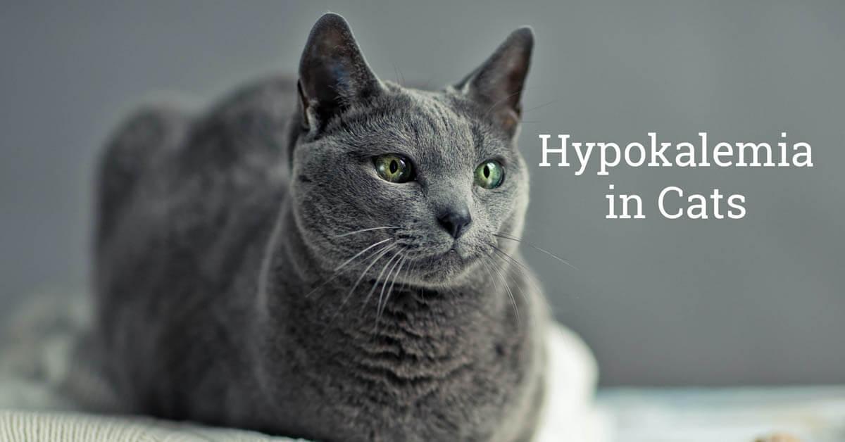 Hypokalemia in cats