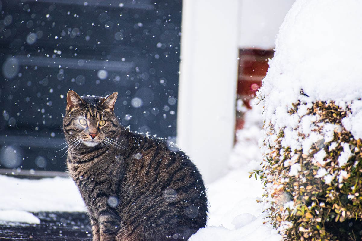 Hypothermia in cats