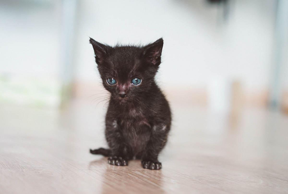 Kitten development - Newborn to eight weeks