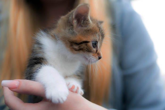 Five week old kitten