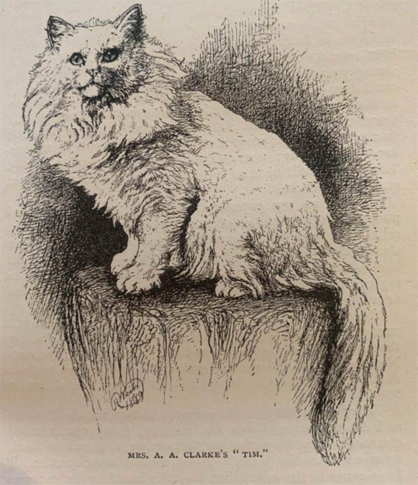 Old Persian cat