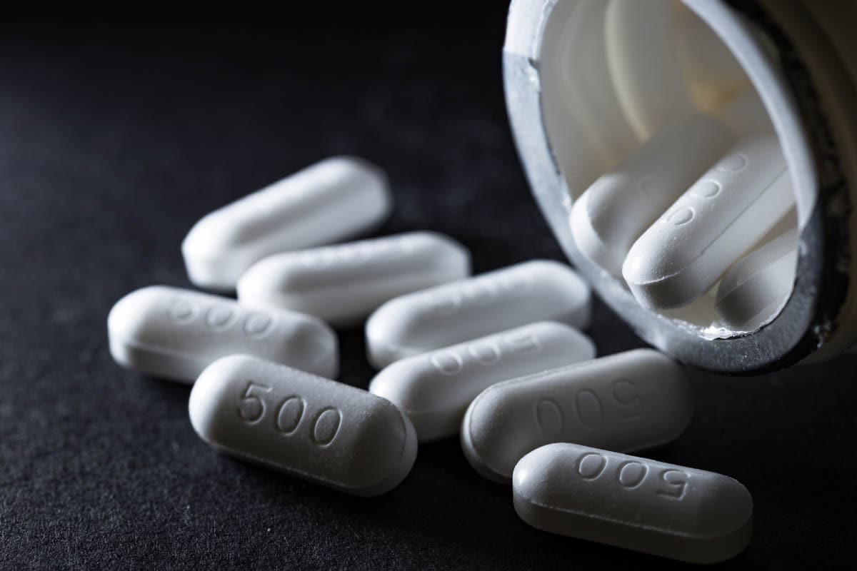 Paracetamol toxicity in cats