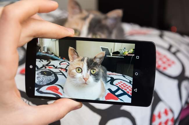 Photographing your cat
