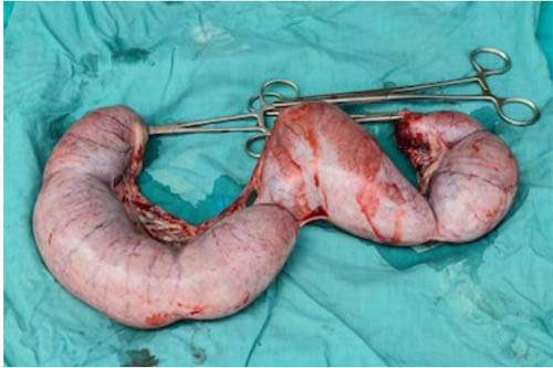 Pyometra in cats
