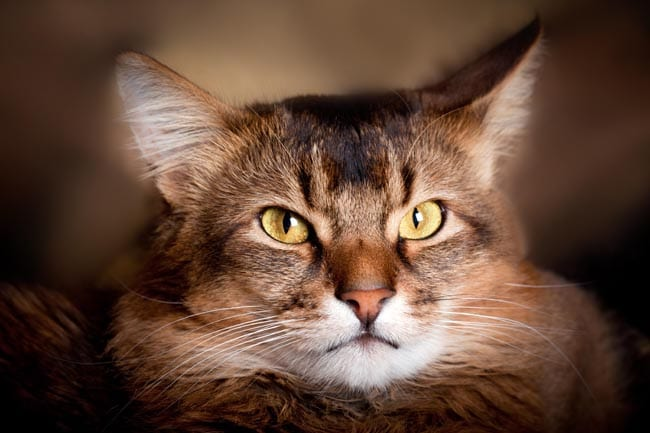 Pyrethrin poisoning in cats