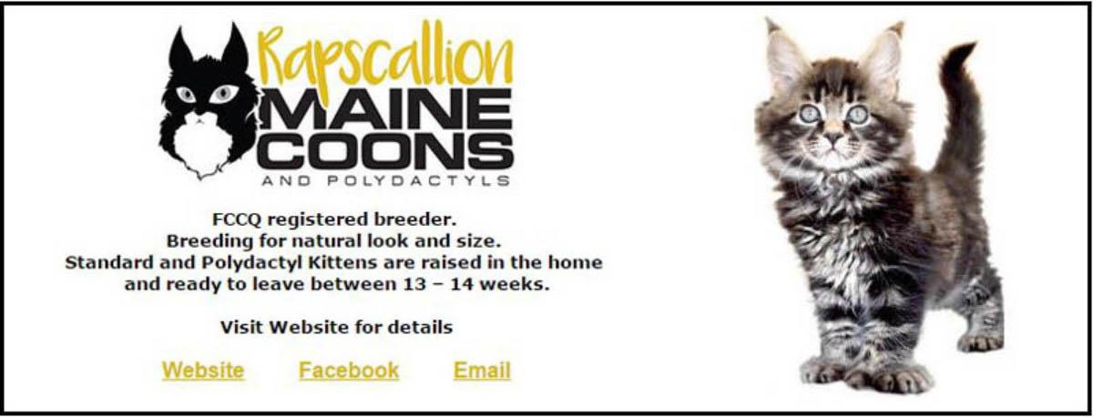 Rapscallion Maine Coons