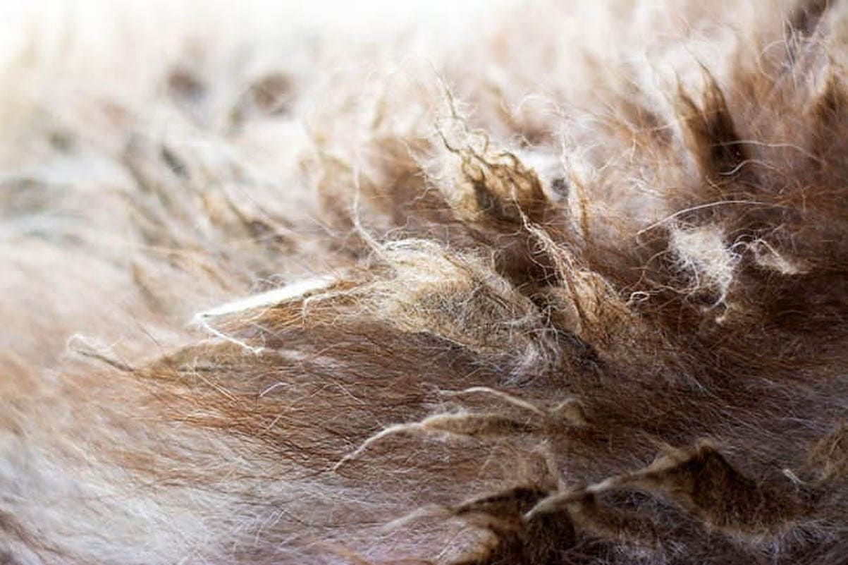 Removing mats from a cat's coat