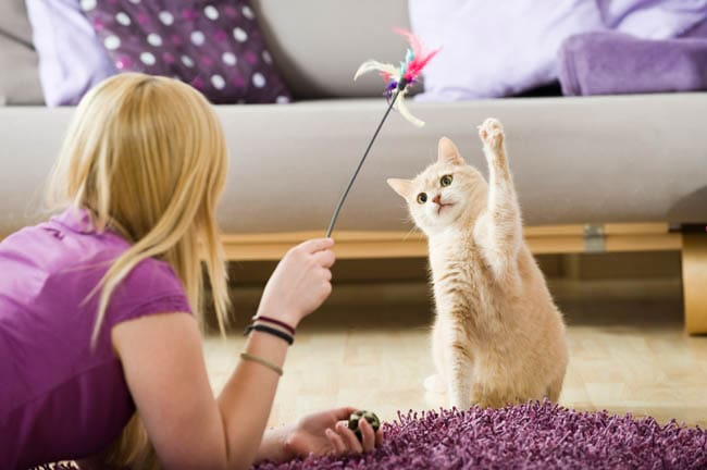 Schedule playtime with your cat