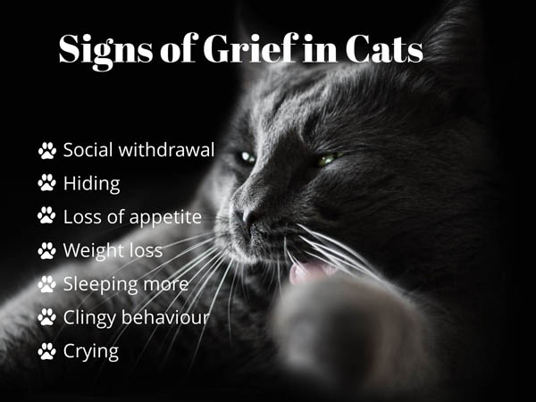 Signs of grief in cats