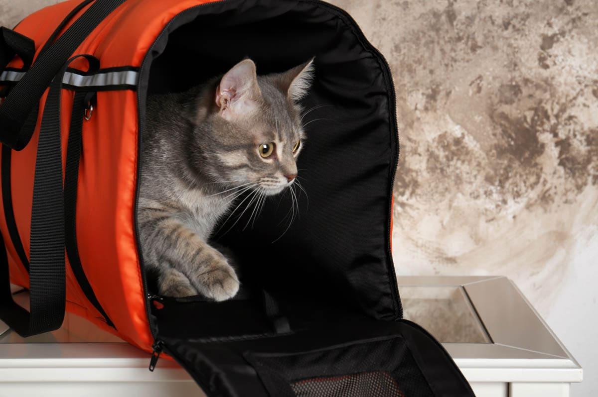 Soft cat carrier