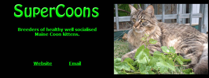 Supercoons Maine Coons