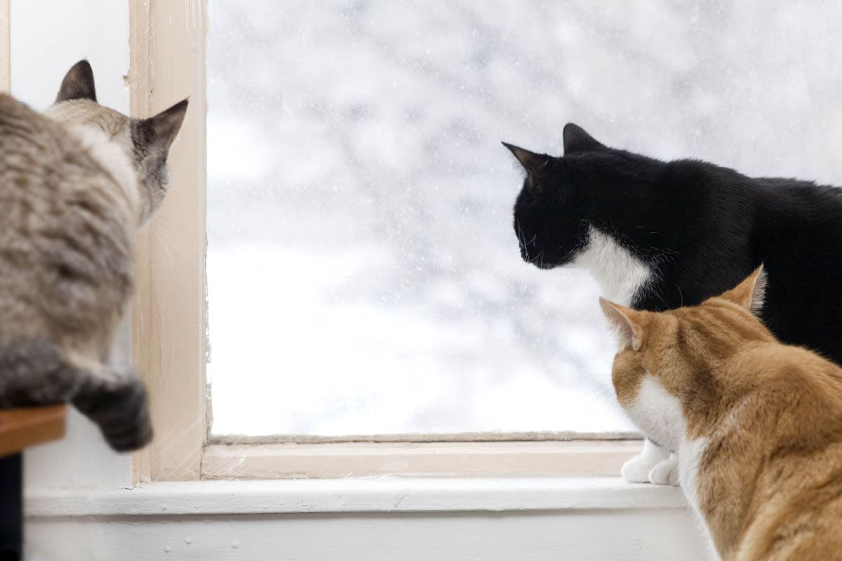 Cats looking out of a window