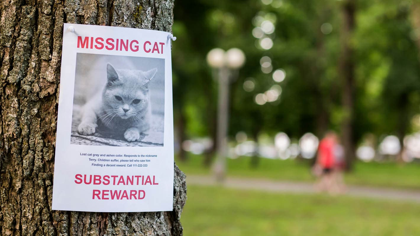 Tips to find a missing cat