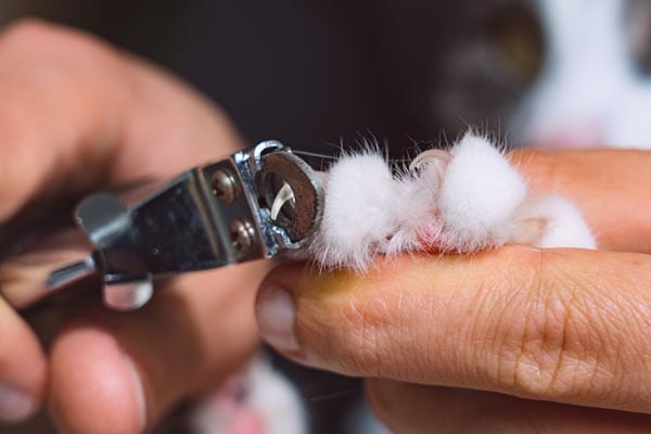 Trimming cat claws