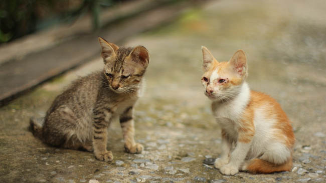 Two stray kittens with signs of cat flu