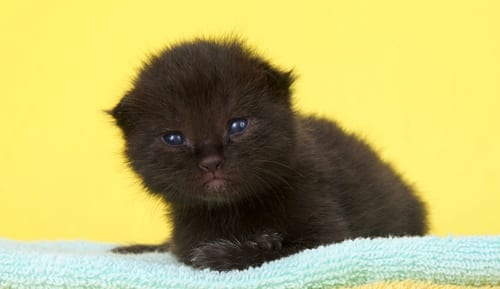 Two week old kitten