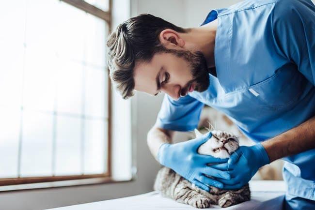 Veterinary checkups