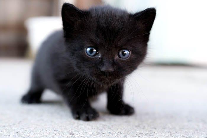 Three week old kitten