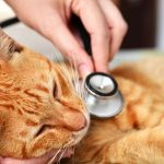 Routine vs Urgent vs Emergency Care for Cats