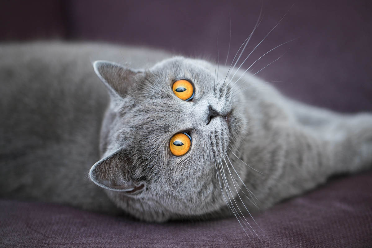 Zinc poisoning in cats